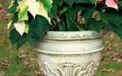 vaso cemento bianco, Vs032